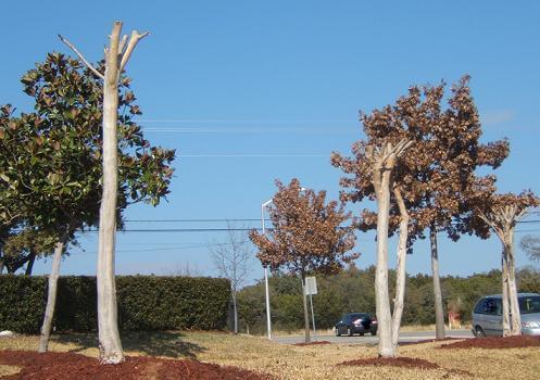 Crepe Murder in Cedar Park, Texas